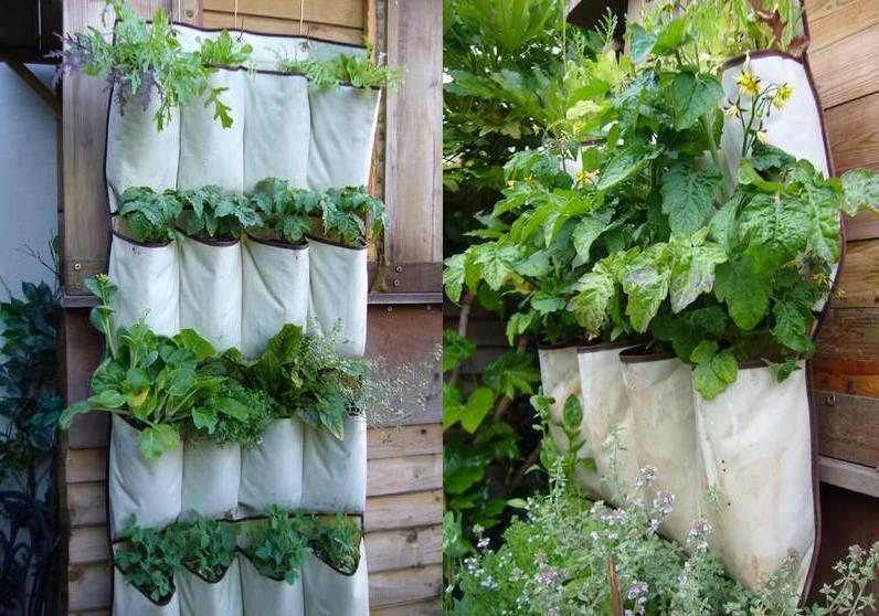 Ottobre: i lavori di giardinaggio nel giardino, nell'orto e in casa