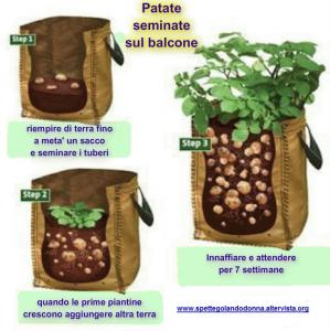 Orto e giardino for Piantare patate germogliate