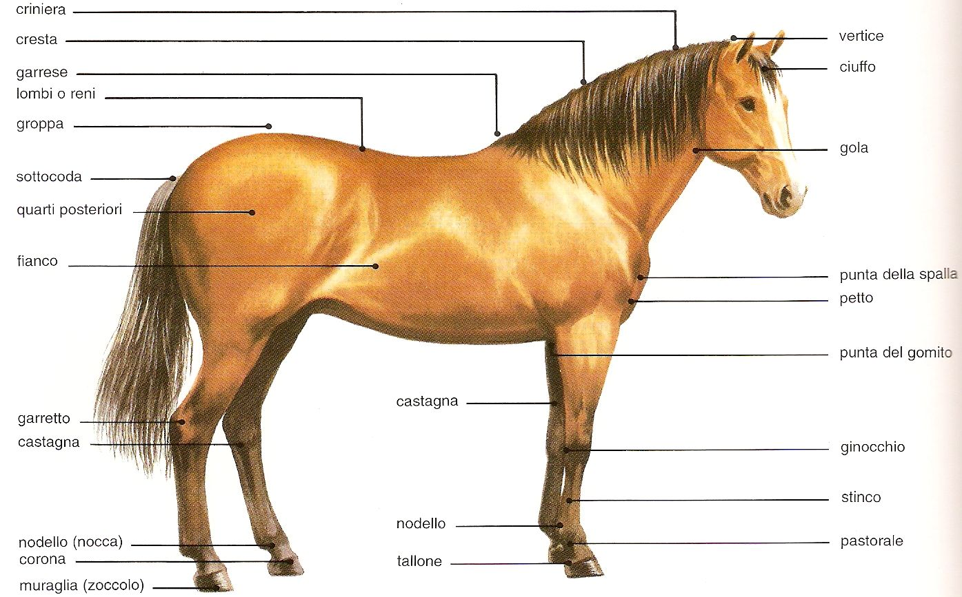 Amici animali - Avere un cavallo ...